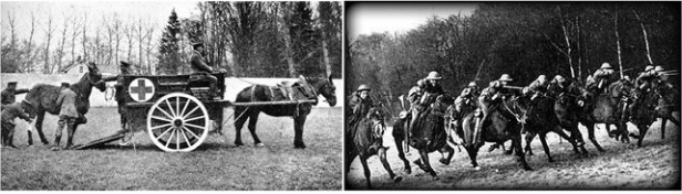 Horses used as ambulances and as cavalry.